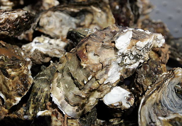 Oysters in California