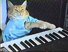 220px-Keyboard_cat