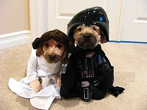 & Cute Pet Costumes