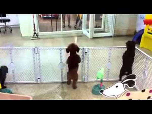Excited dog dances and jumps up and down like a human video