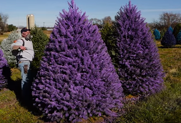 This New Jersey Tree Farm Wants You To Have a Colorful ...